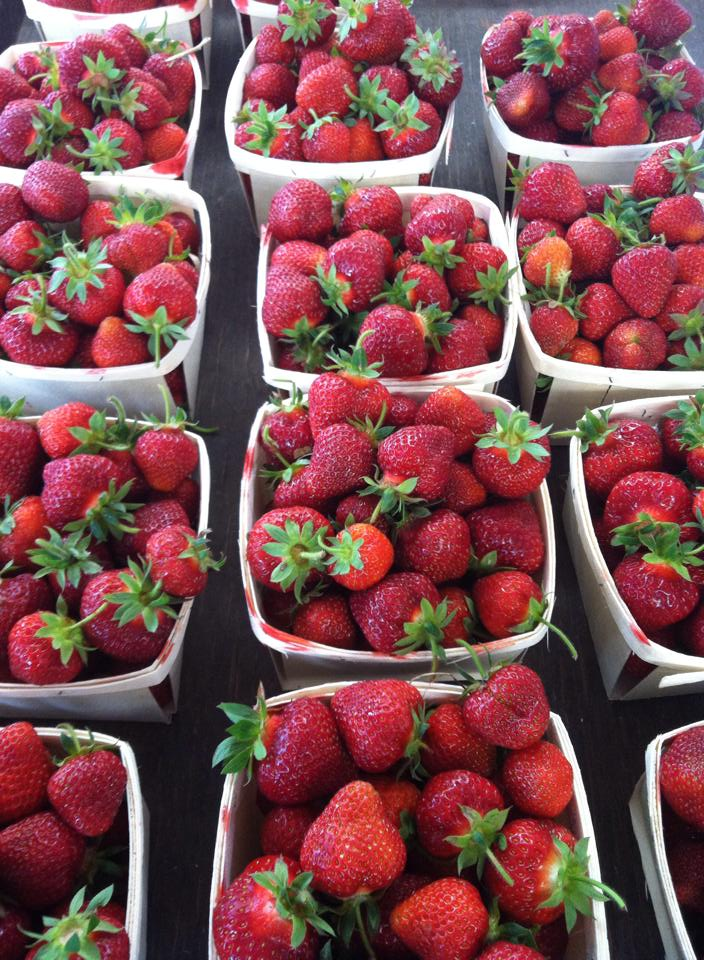 Mid summer Strawberries are just a few weeks away!
