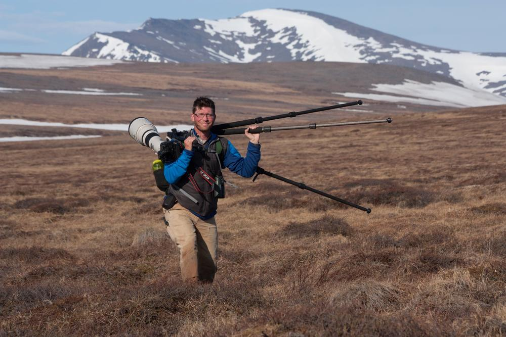 Trekking in search of Baird's Sandpiper, Nome, Alaska. Photo by Luke Eberhart-Phillips.