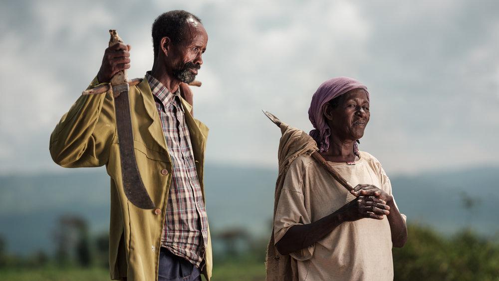 Ethiopia-Starling-PietVandenEynde_004.jpg