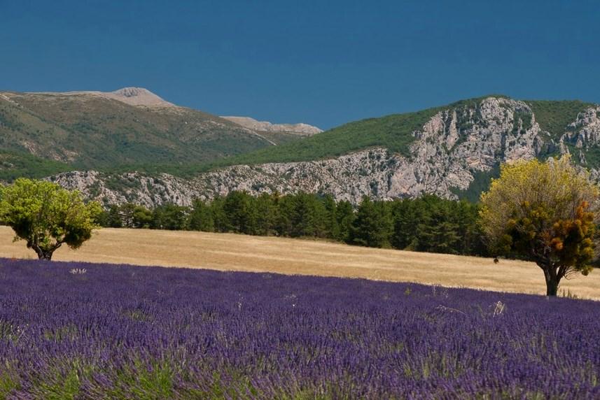lavendel-plateau-de-valensole-IMG_6024-provence.jpg