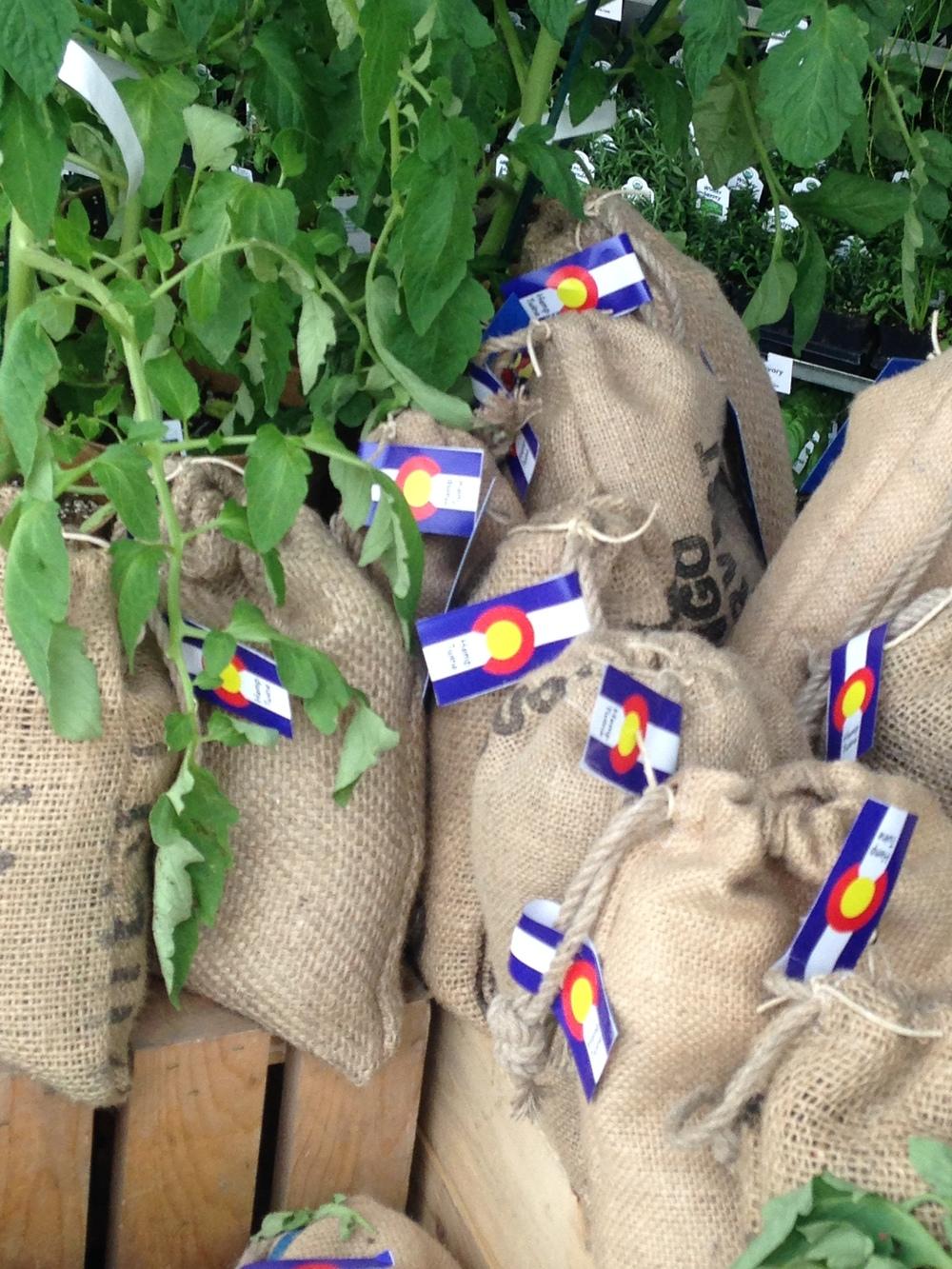 Home grown Tomato plants. Gotta love the Colorado Flag.