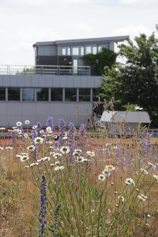 Augustenborg Botanical Roof Garden.Photos: www.odu.ro