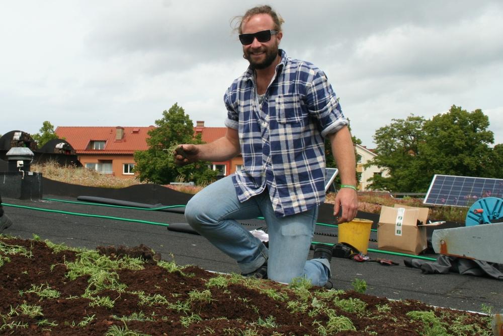 Installation: Planting