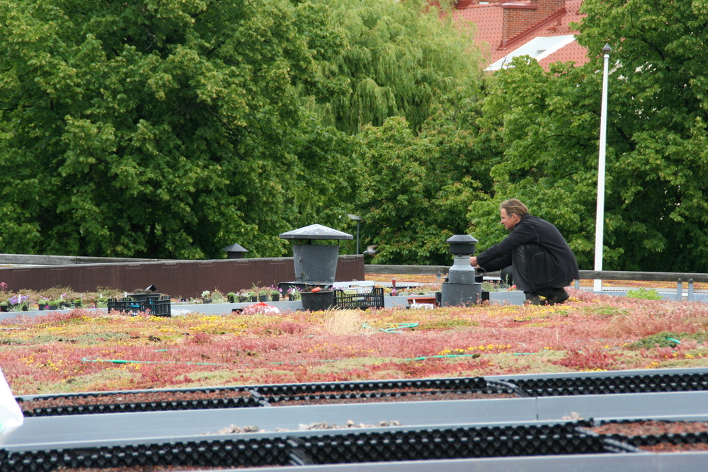 Peter Korn: Green Roof Installation. Augustenborg Botanical Roof Garden. June 2015