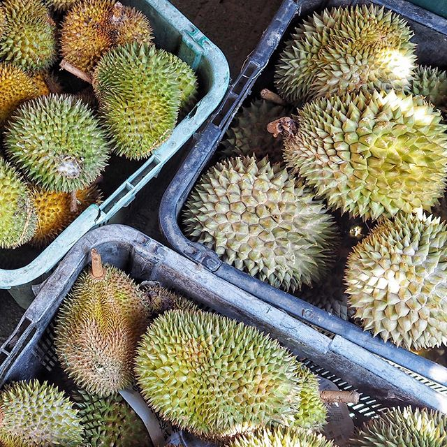 Have your fill of durian for good cause! Head down to Lee Ah Mooi Old Age Home Durian Fundraiser Fest! Event starts now till 5pm today.  #DurianForGood #LeeAhMooi #thevolunteerswitchboard