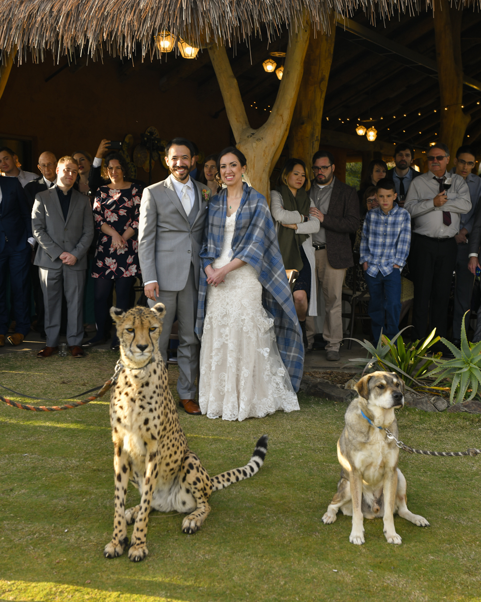 Safari-Park-Wedding-Stephanie-and-Sam-Brant-Bender-Photography-049.jpg