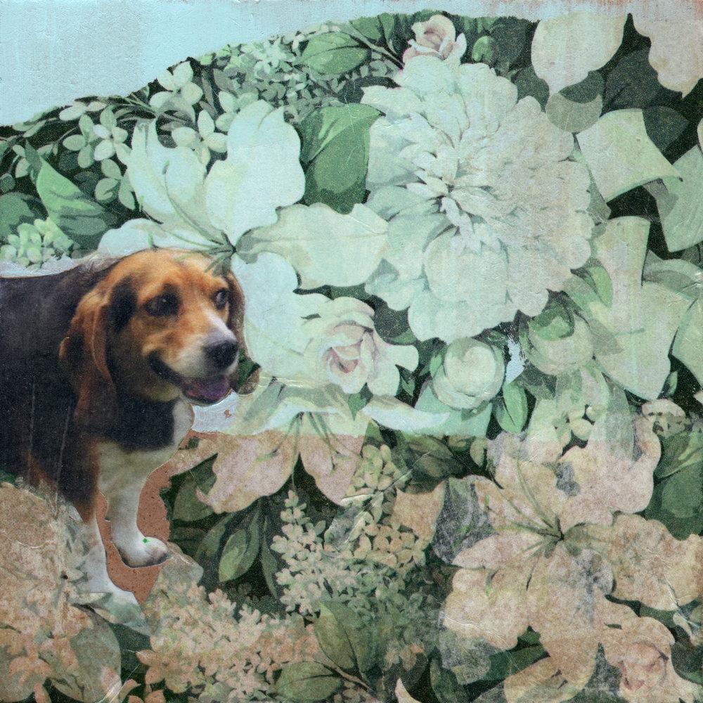 Ruby in the Garden.jpg