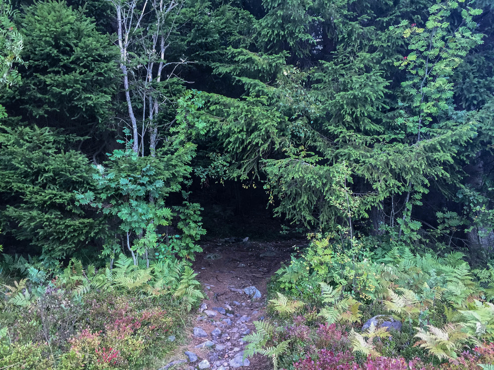 Dette hullet i skogen leder til fine stier.