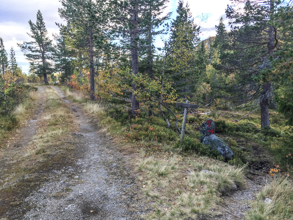 Underveis til Eriksbu.Skogsvei blir til sti.