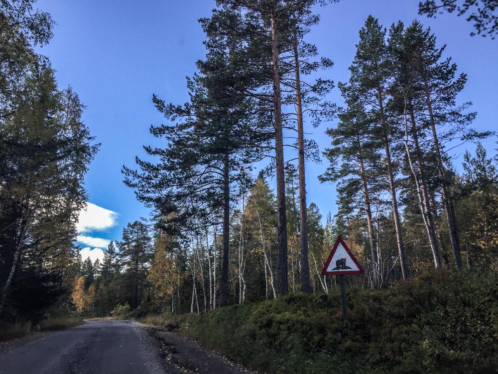 Er det bjørn her? Dette skiltet på vei opp til Butjønn varsler om villdyr.
