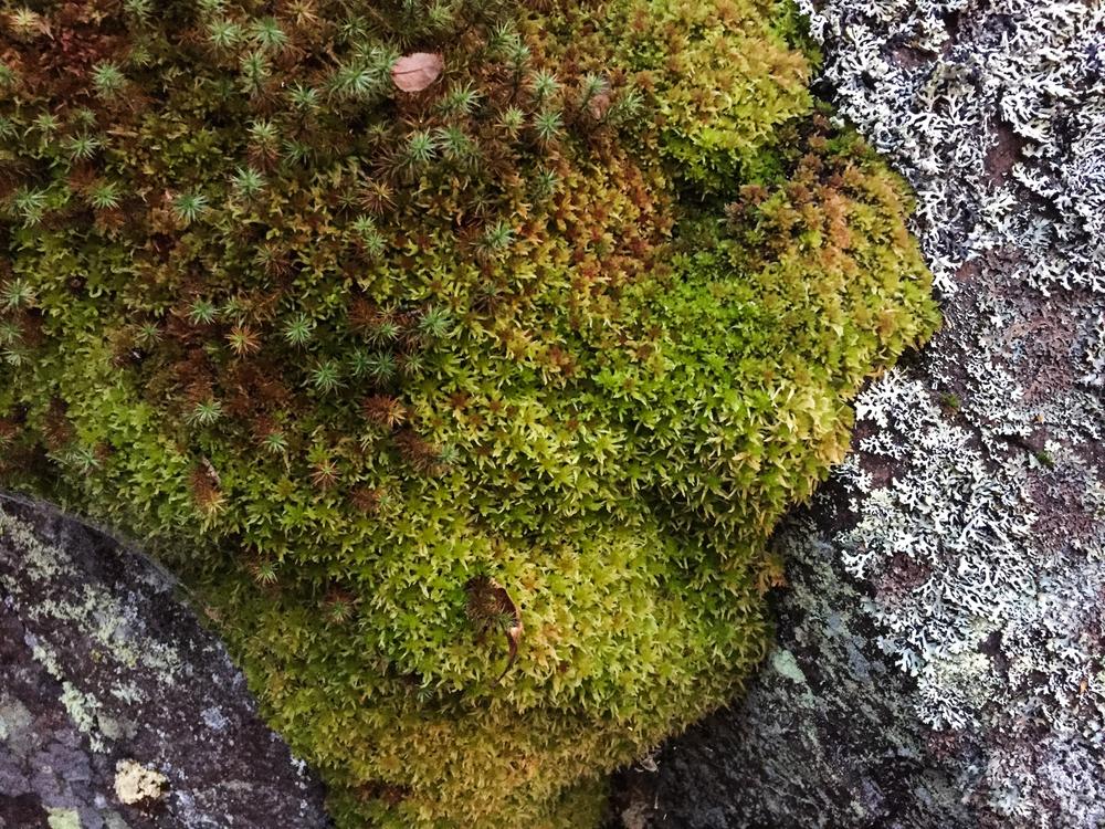 Naturens kunstverk er overalt.
