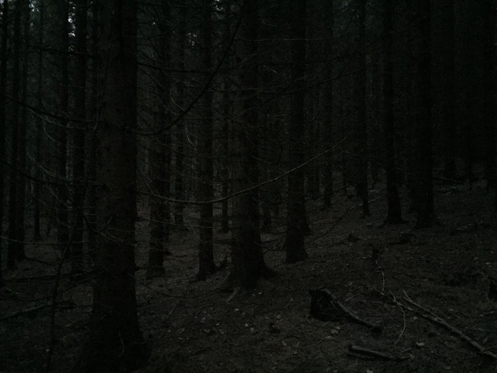 Den mørke skogen.