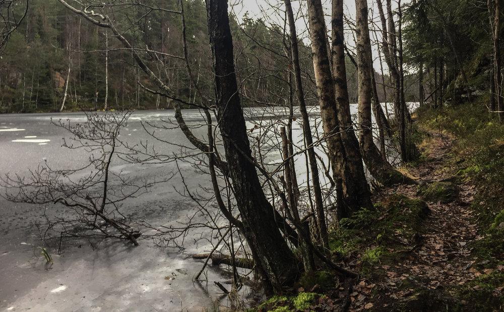 Isen er ikke trygg. Denne greina prøver seg likevel på en tur på Langevann. Se den fine stien som går her!