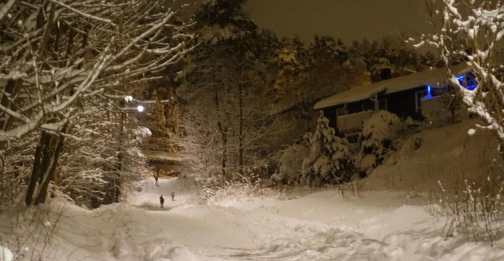 Rådyrbanden er på vei tilbake til skogen etter natterangling i byen.