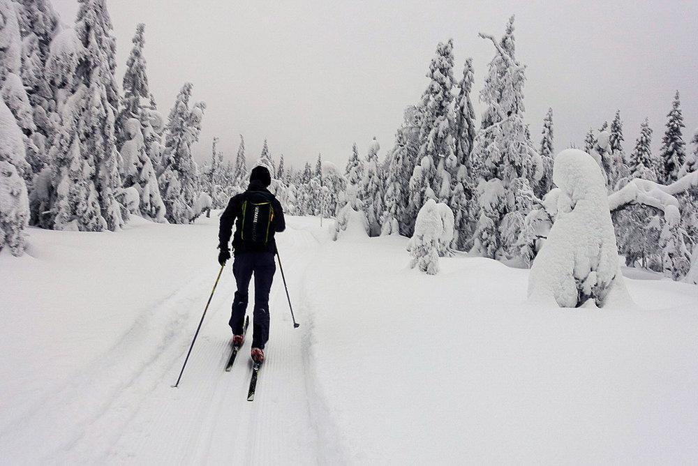 Johannes trives på skuterkjørte løyper blant snøtunge trær.Foto: Bjørnar Eidsmo.