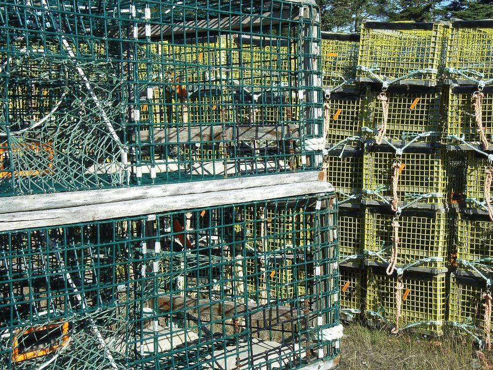 traps-701613_1280.jpg