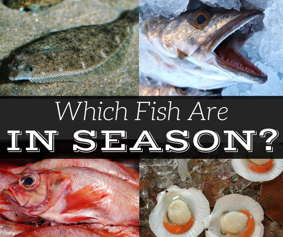 Seasonality of New England Fish