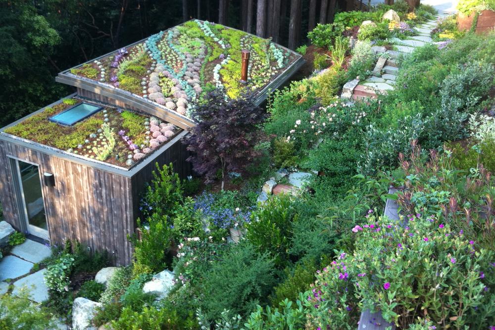 Sloan garden.jpg