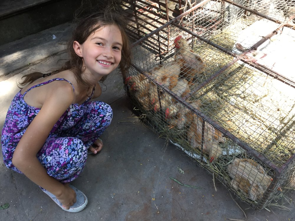 Of course we found some chickens as well.