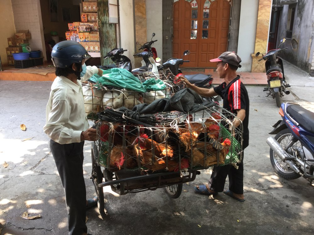 Poultry delivery to the market.