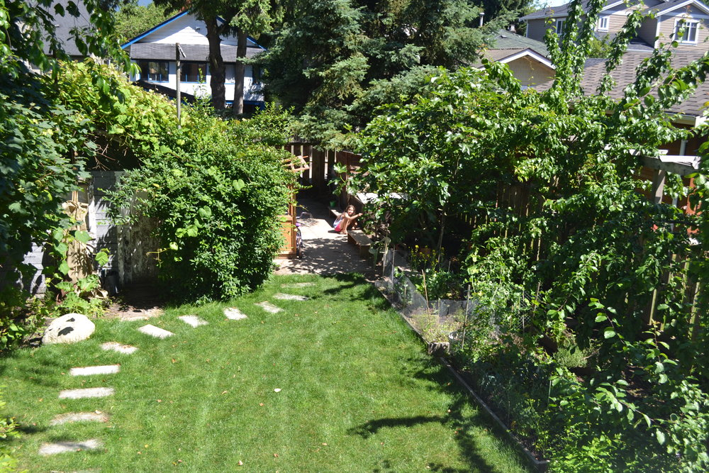 More greenery - this is our backyard. Lili is in the back by our chicken coop.