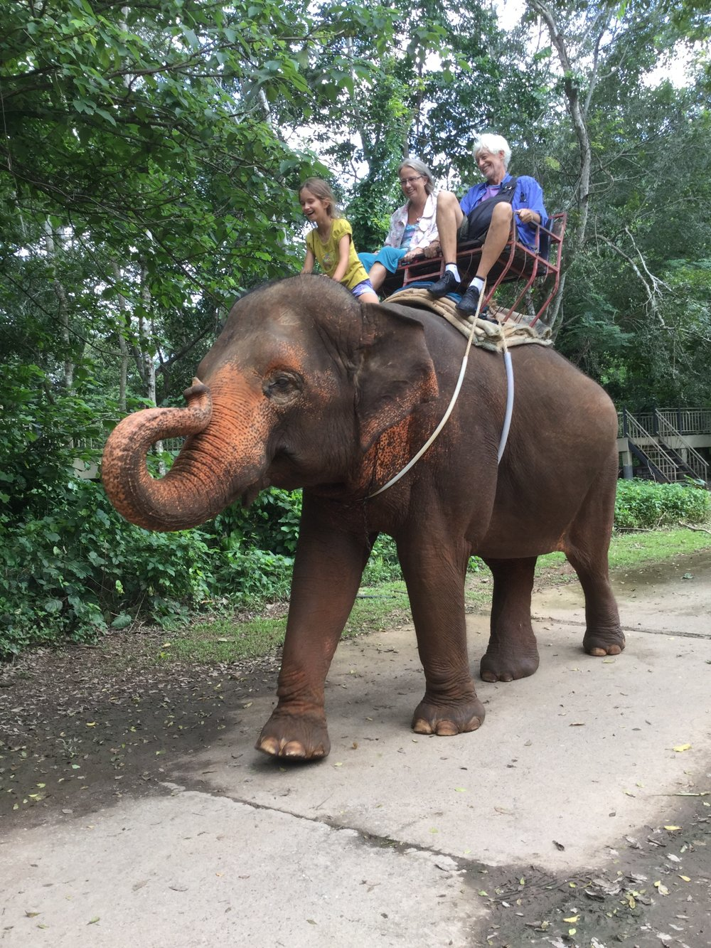 Lili is so fearless. She went to sit on the elephant's neck and rode there for a long time - just like that!
