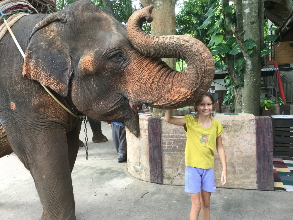 After the ride Lili got to pet the elephant and feed it some cucumbers. Note she is wearing her elephant t-shirt.