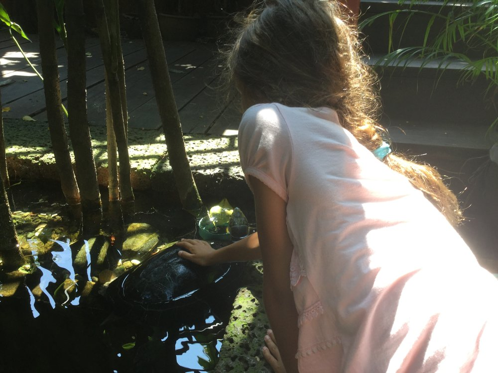 Greeting a friendly turtle in the pond.