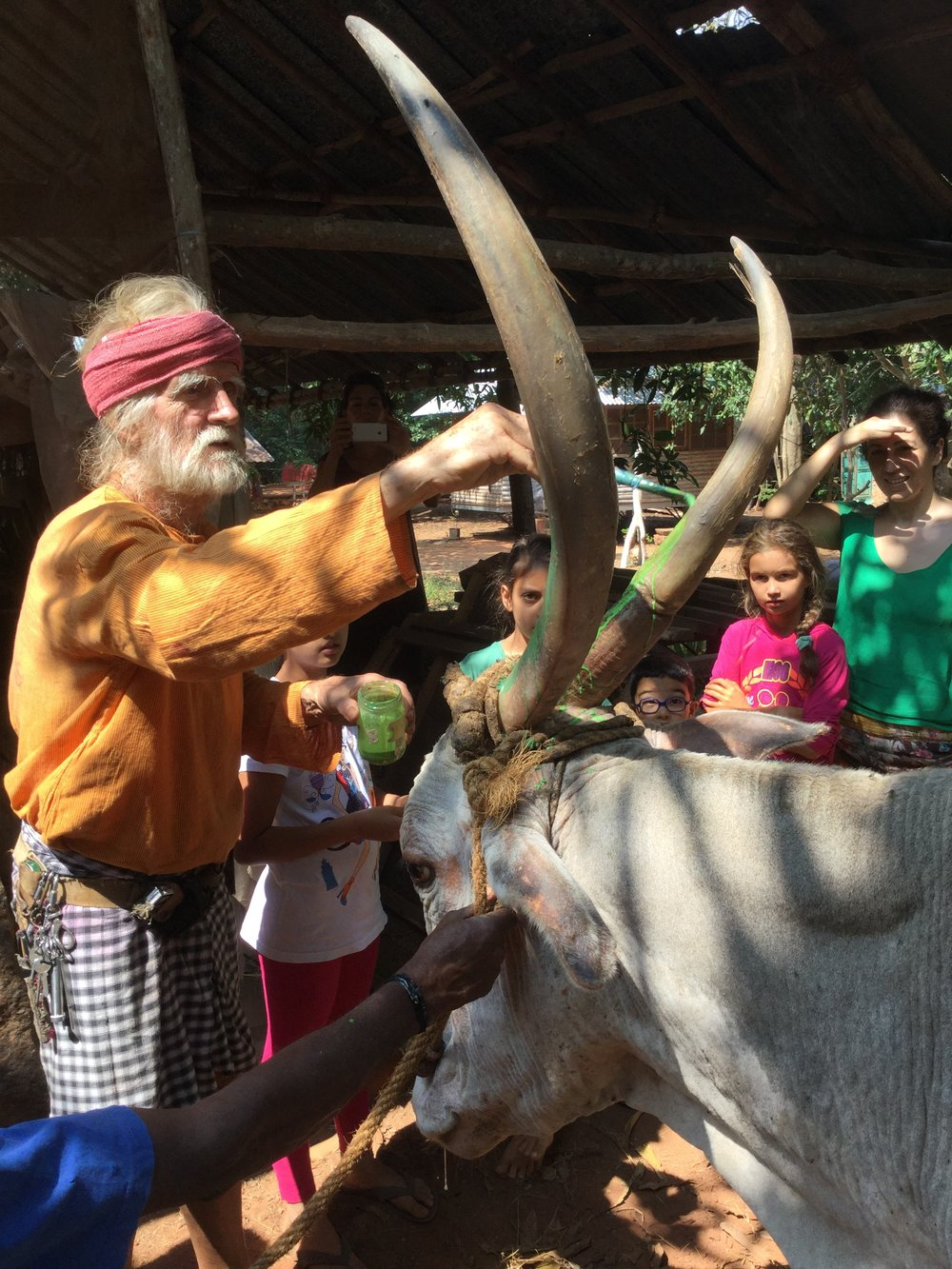 Johnny painting the bull's horns. Painted bovine is a big part of Pongal...