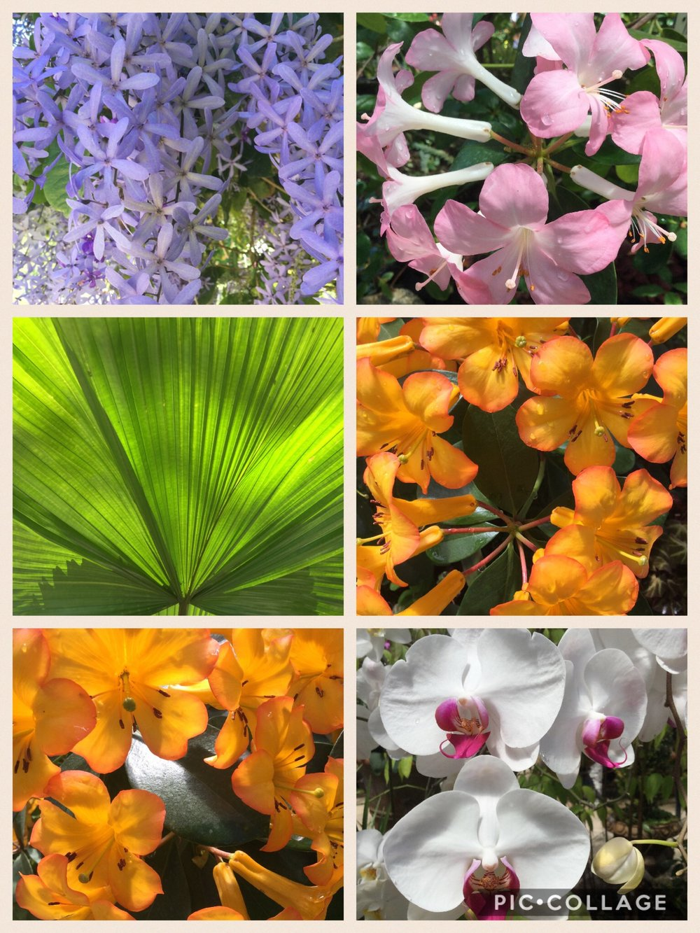 Lili made a collage of some of the plants and flowers we saw. The orchids are amazing here and we also saw vanilla vines - Mexico and Madagascar are the two largest producers on vanilla.