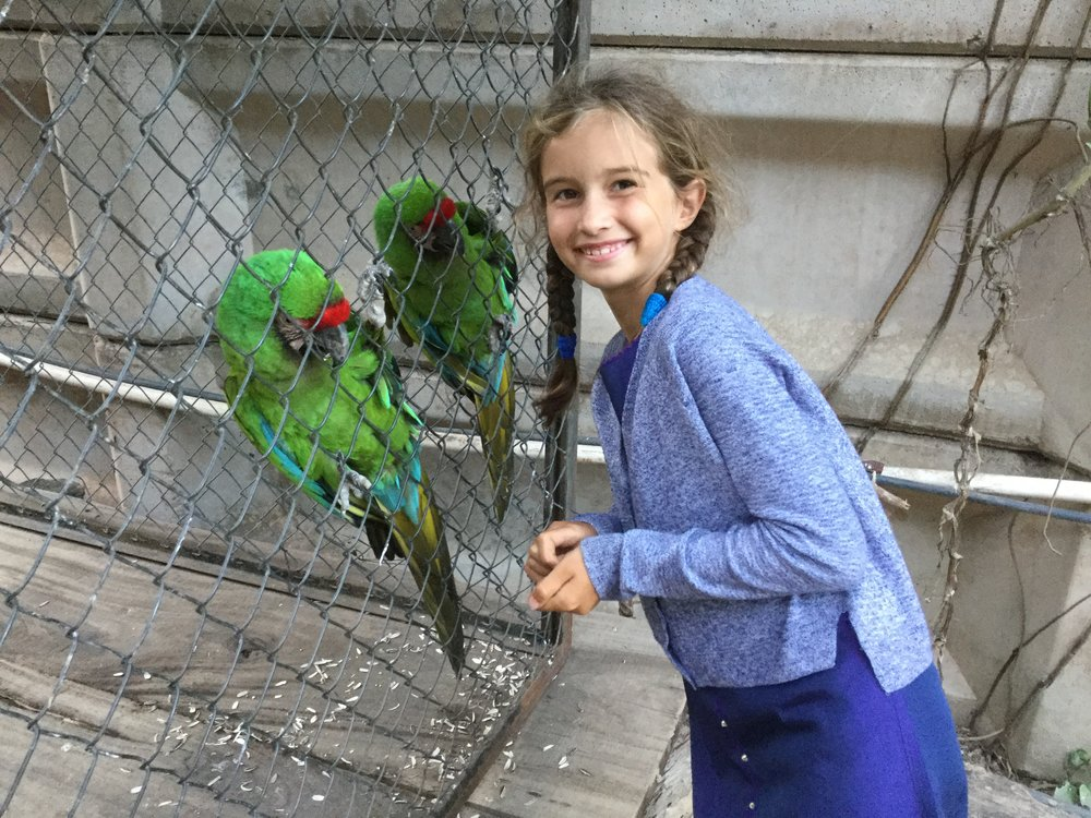 And guess what? They have two large macaws in a cage at their parking lot. Lili was very happy to feed them some sunflower seeds that the owners thoughtfully leave by the cage.