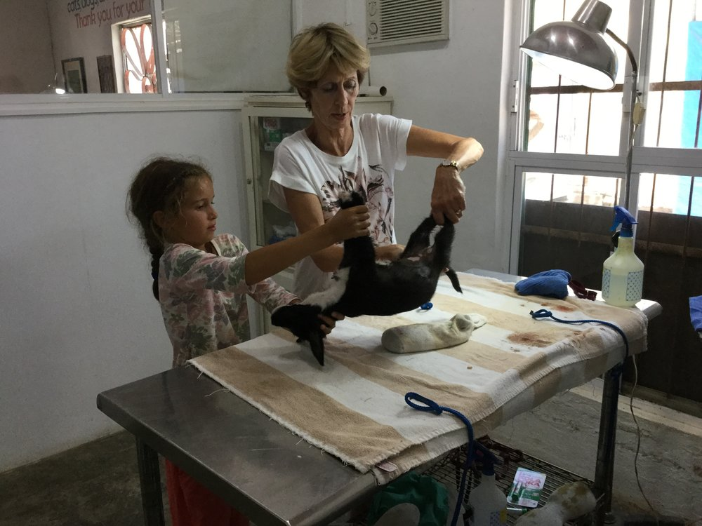 Lili helping Cynthia lift an anesthetised puppy to the surgery table.