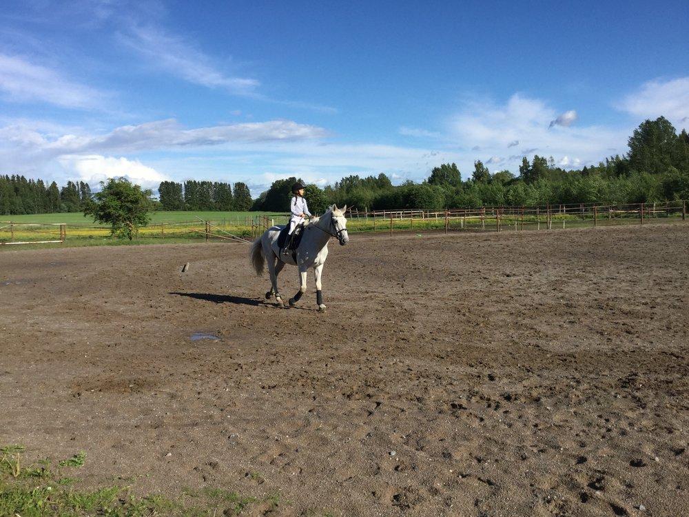 Lili on Eetu, a beautiful 23 yo gelding from Estonia.