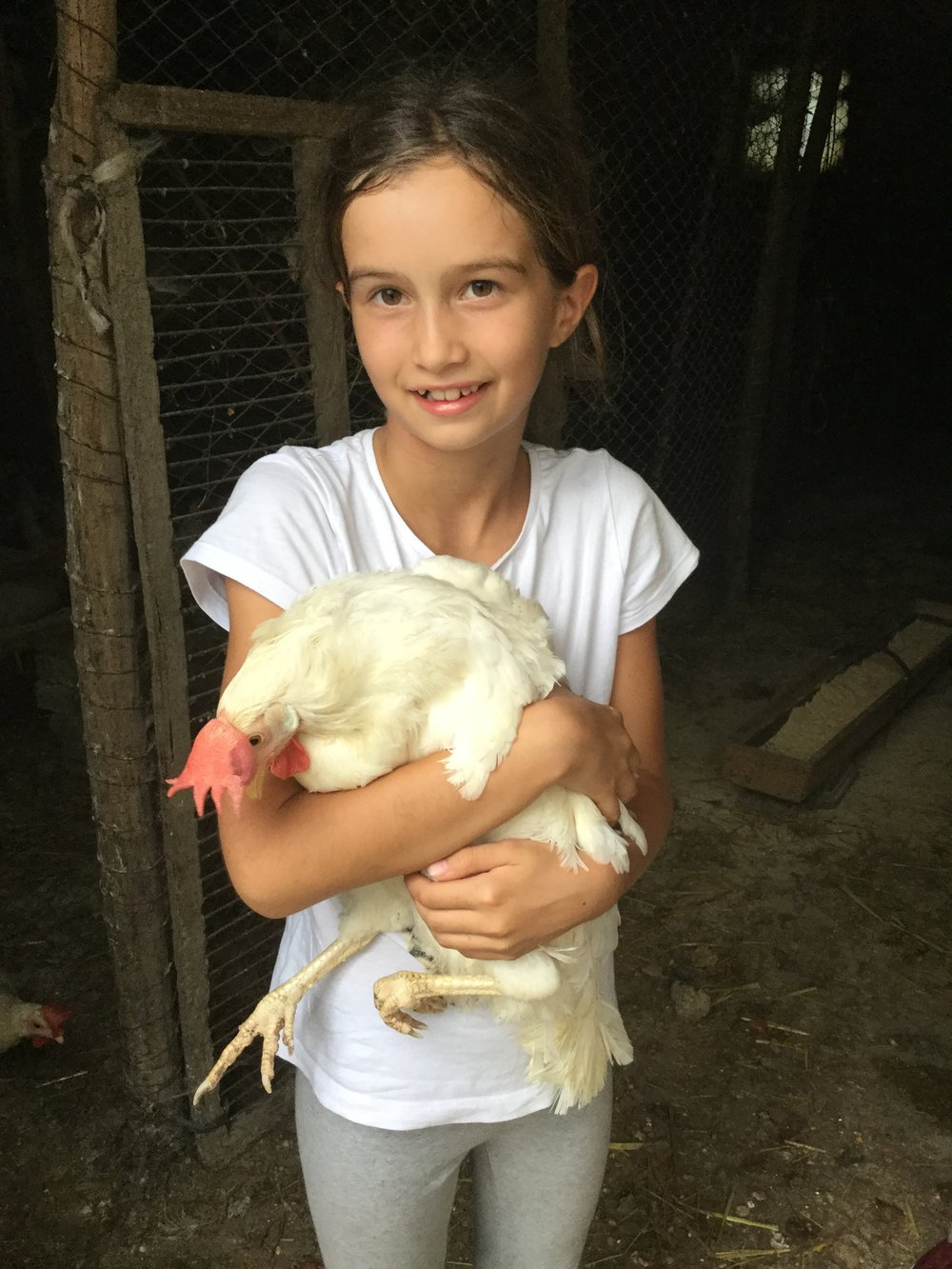 Quick relief for missing our chickens in Canada - Torino chickens are cuddly too.