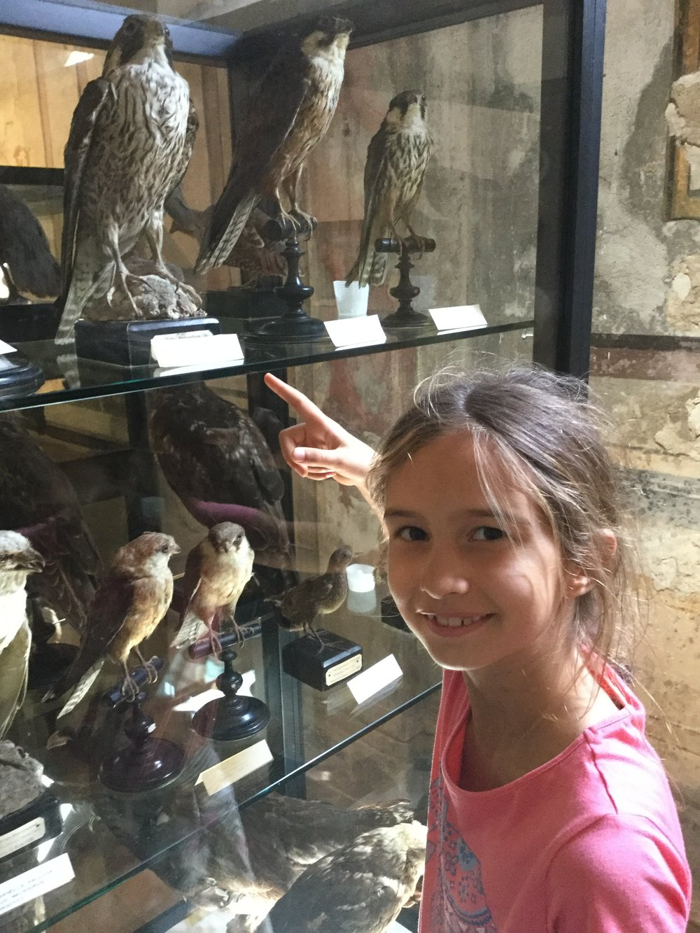 There is an Ornithology Museum with a bird collection that is over 100 years old! Lili found the Peregrine Falcon, the fastest animal on earth. She said it looked smaller than she thought.