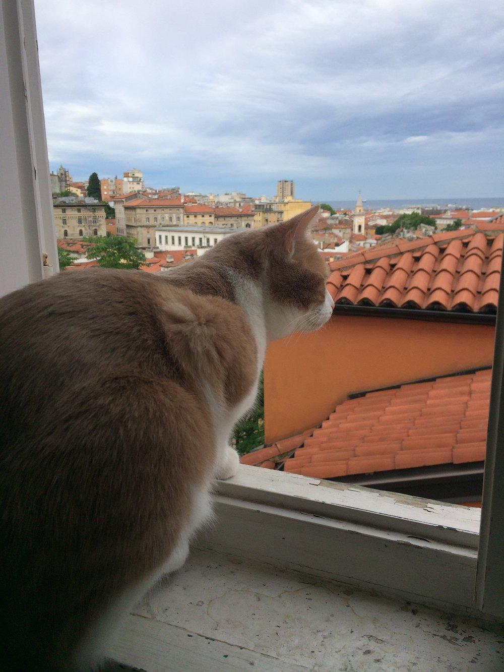 Attila ponders his next attack