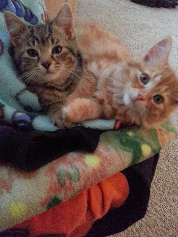 Welcome home Pippin (right) and Potter (left) 2015
