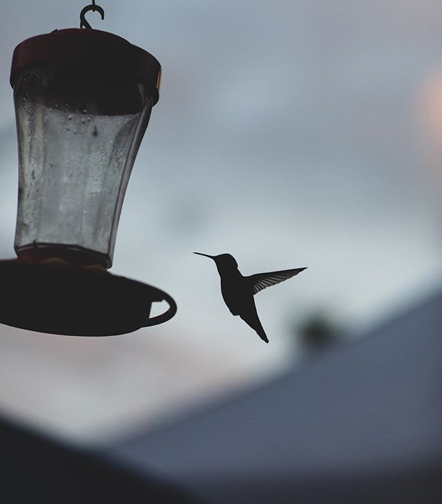Hummingbirds frequent our garden - a sign of love, beauty, trust, and abundance ... reminding us to continue to forever wonder/wander...🌵 . . . #whywehostel #travelgram #hostellife #instagramaz #hummingbird #arizona #phx #exploremore #neverstopexploring #intentionalliving
