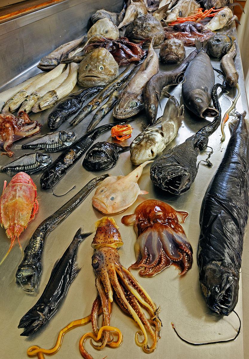 11_Deepsea fish_18686.jpg