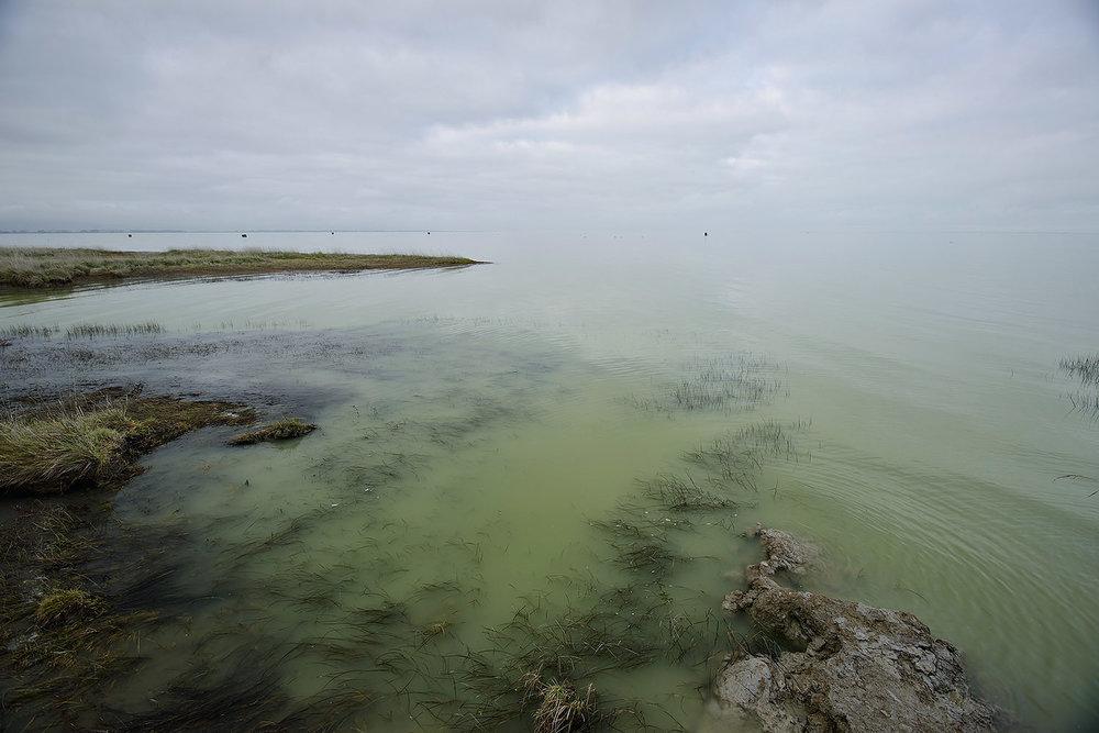 18_Lake Ellesmere_E65633.jpg
