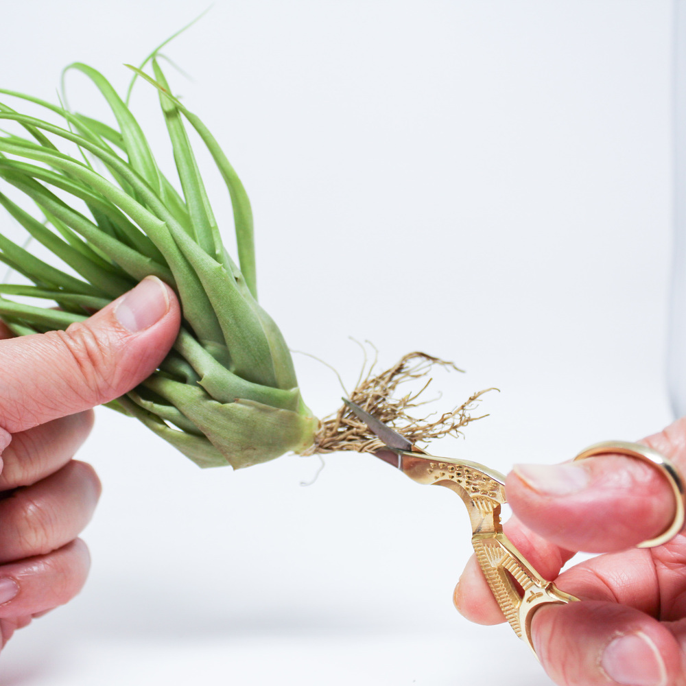 Air Plant Care | Roots by Handmade Sam*Made