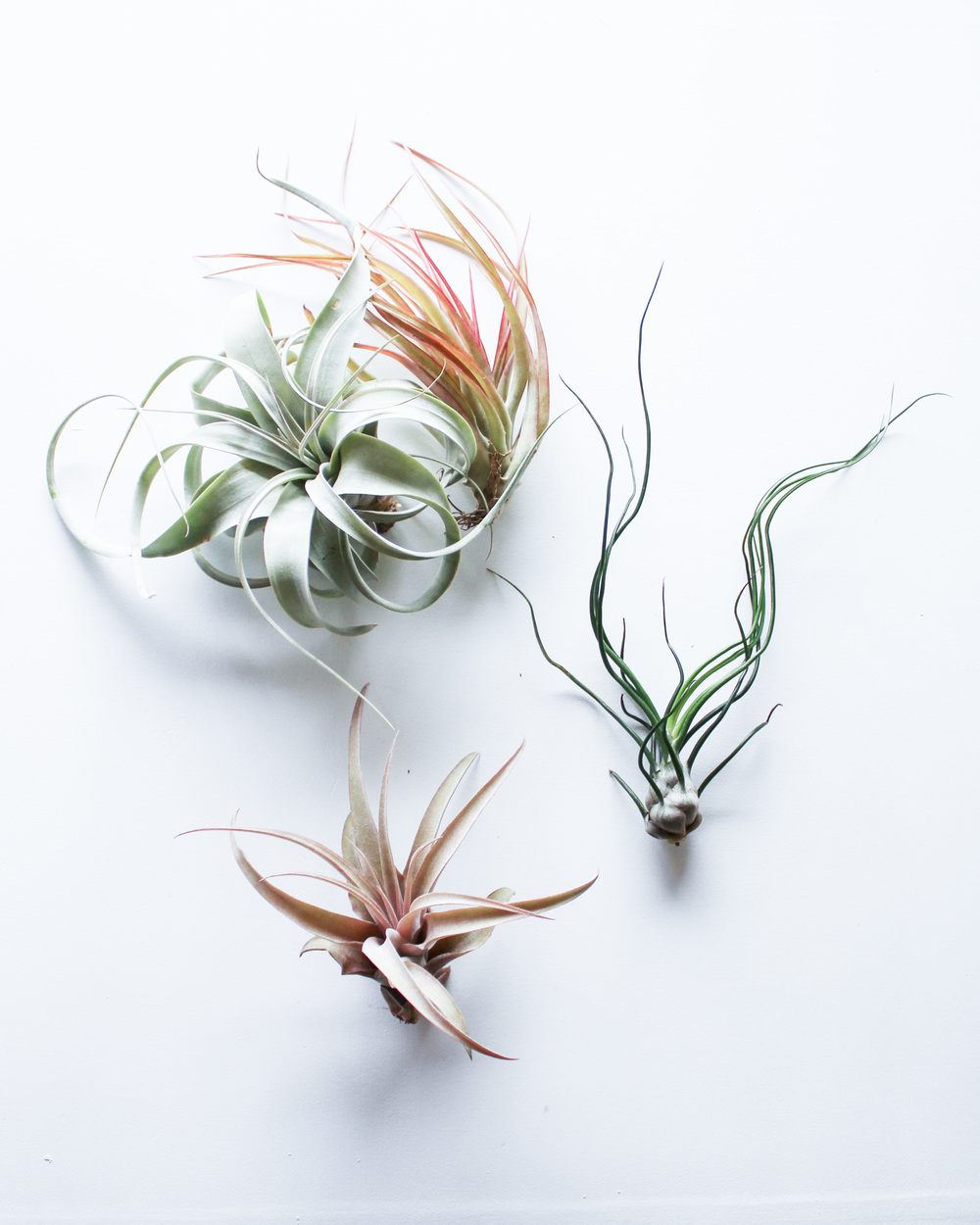 Air Plants by Handmade Sam*Made | www.handmadesammade.com