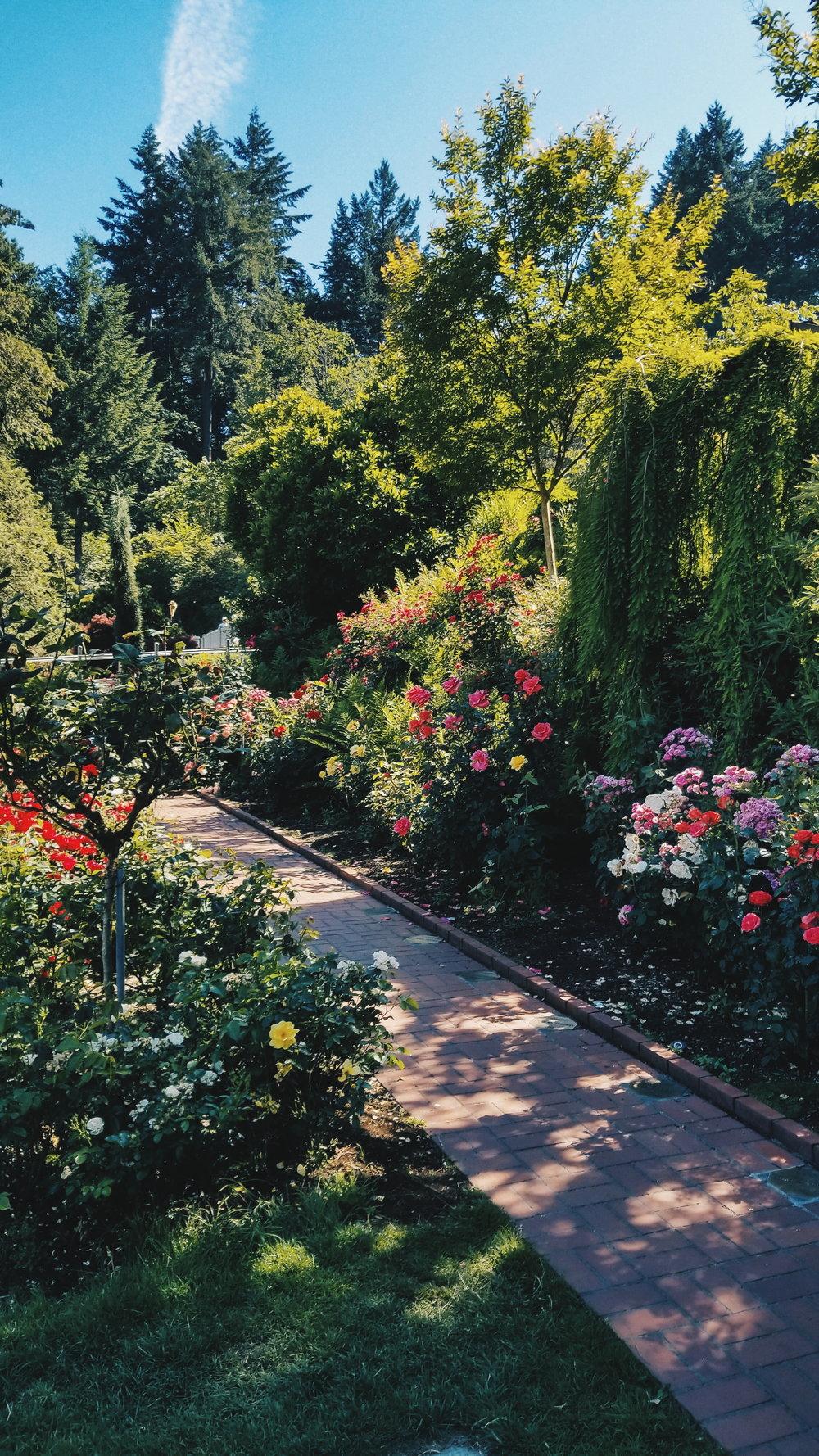 HEMLEVA Samantha Leung Portland Rose Garden.jpg