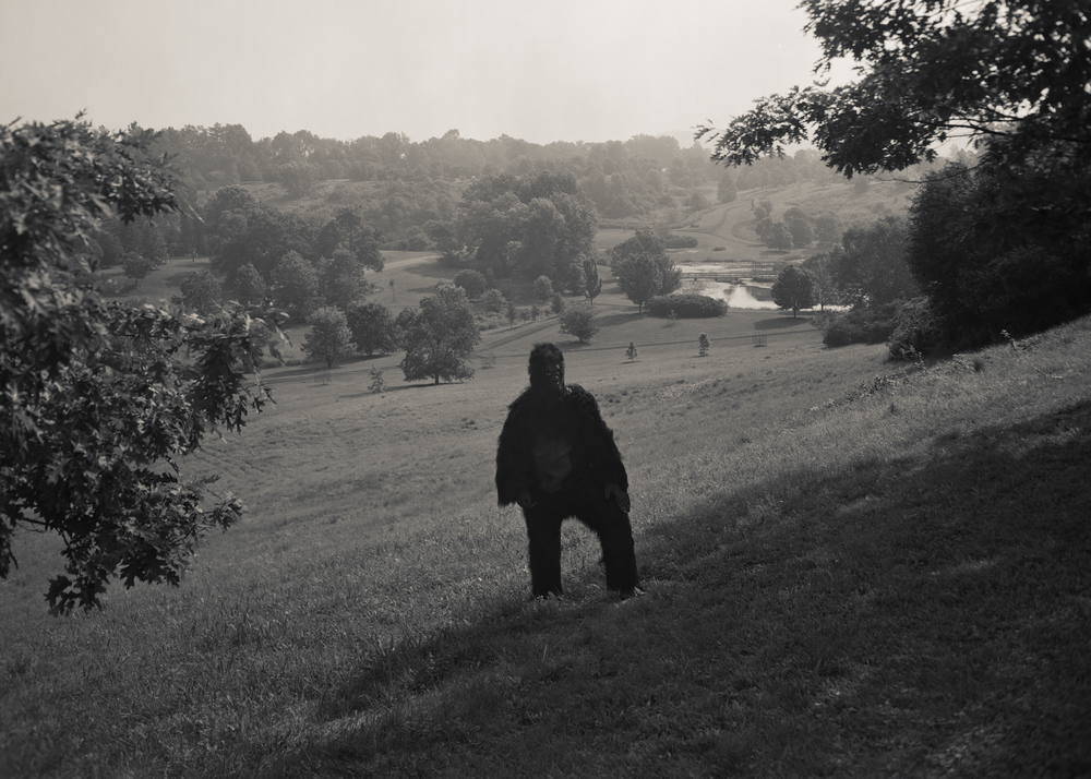 Gorilla-In-The-Field001.jpg