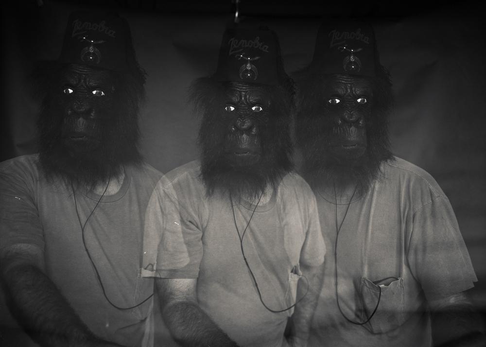 GorillaZen003.jpg