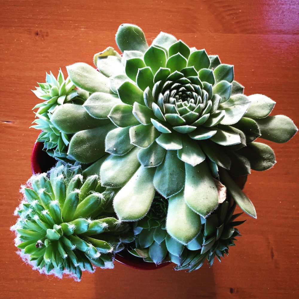 Succulent Table setting.