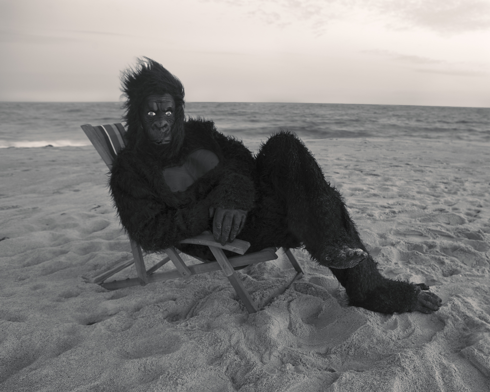 Gorilla On The Beach