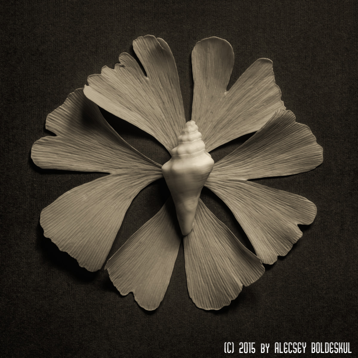 Organic Form Photography
