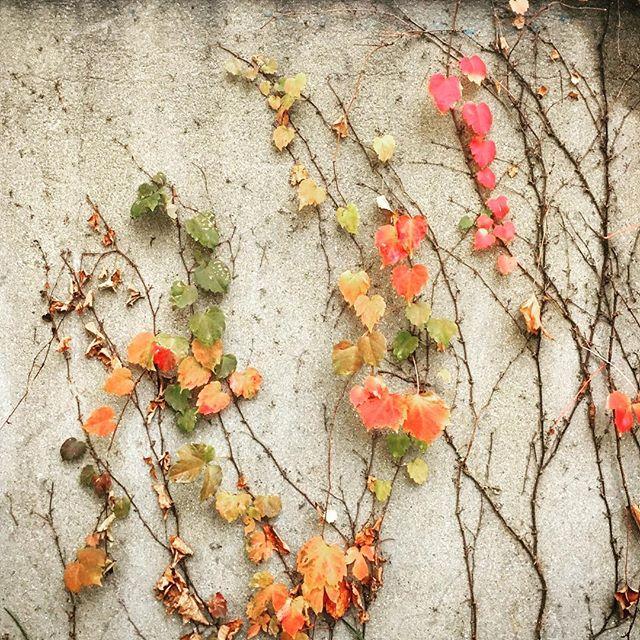 #Fall in #Seoul #foliage