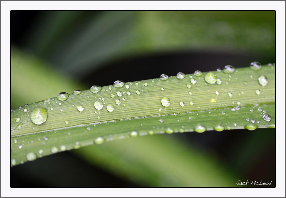 DaylilyLeaf&Raindrops_matte.jpg
